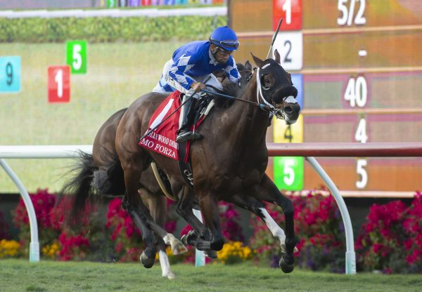 Mo Forza (Uncle Mo) Winning G1 Hollywood Derby