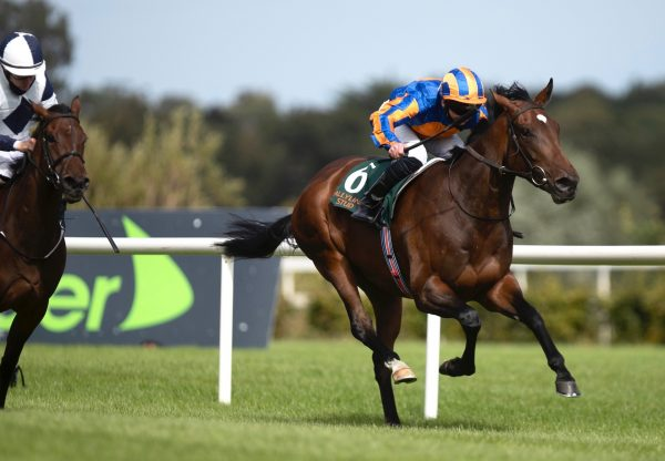 Monday (Fastnet Rock) Wins The Listed Ingabelle Stakes at Leopardstown