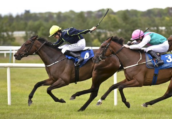 Morpho Blue (Mastercraftsman) Wins At Limerick