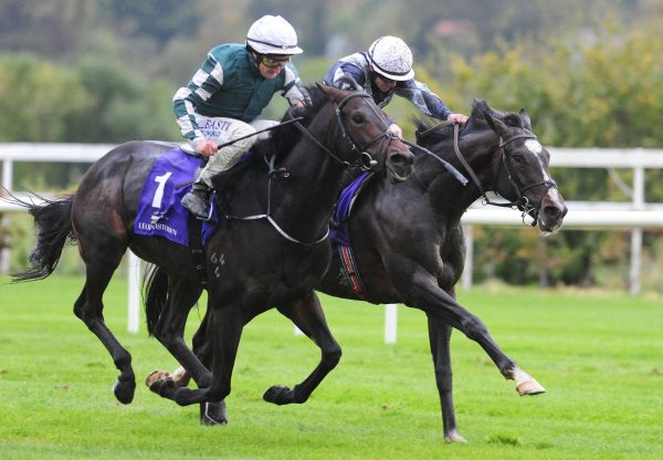 Mount Everest (Galileo) wins the Listed Trigo Stakes at Leopardstown