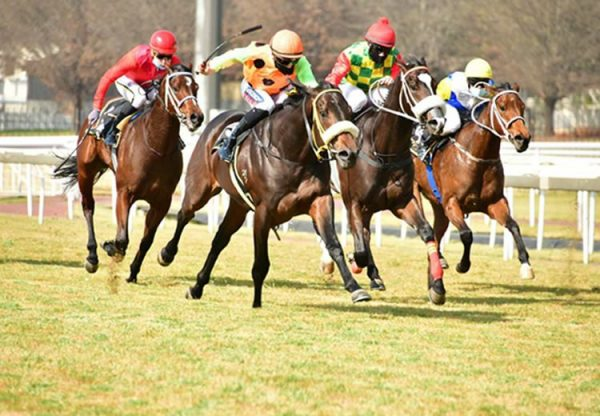 Mount Pleasant (Vancouver) winning a juvenile plate in South Africa