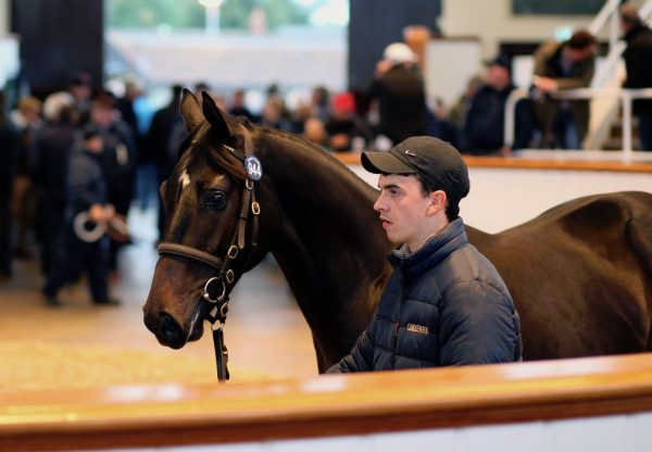 No Nay Never Colt Ex Seatone selling at Tattersalls Book 2 for 450,000gns