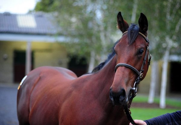 Pure Zen (Zoffany) winning the Listed Prix Francois Boutin at Deauville