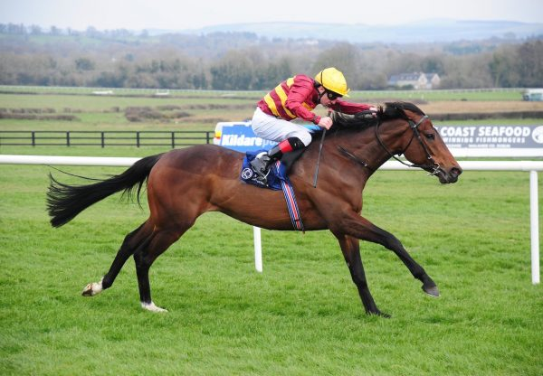 Numerian (Holy Roman Emperor) Wins The Listed Devoy Stakes at Naas