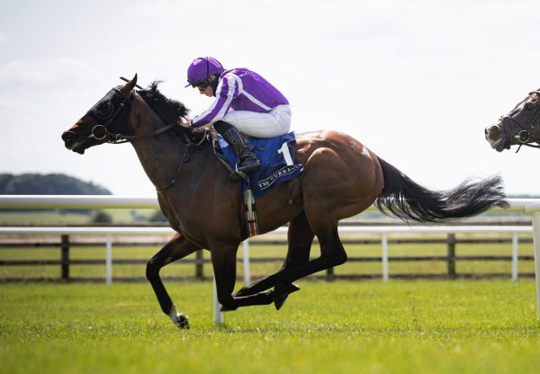 Order Of Australia (Australia) Wins The Group 2 Minstrel Stakes At The Curragh