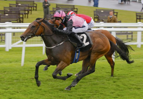 Orlaith Becomes Latest Stakes Winner By Fastnet Rock Resized