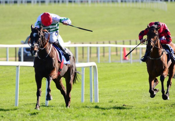 Party Central (Yeats) Wins The Listed Bumper At Fairyhouse