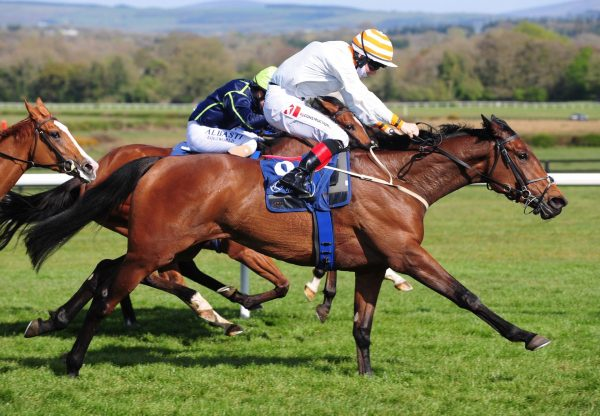 Party House (Camelot) Makes A Winning Debut At Naas