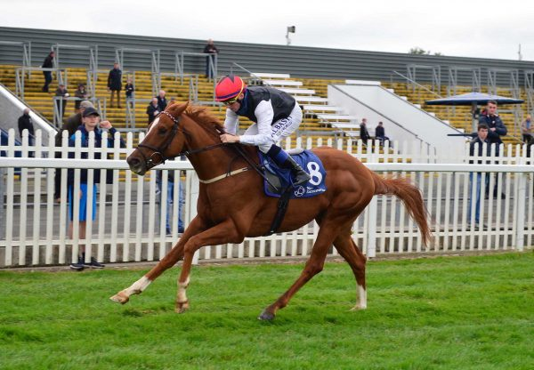 Pearle D'Or (Starspangledbanner) Makes A Winning Debut At Naas