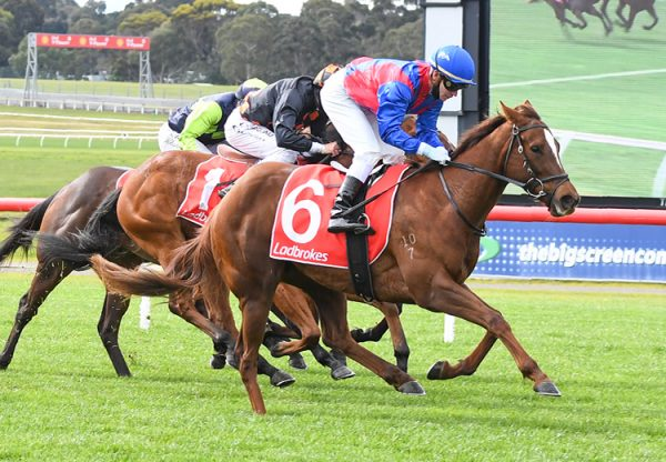Peggy Selene (Rubick) winning at Sandown