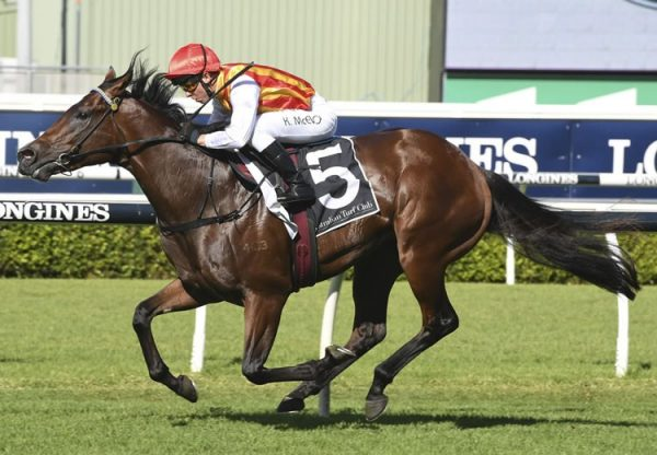 Peltzer (So You Think) winning at Randwick
