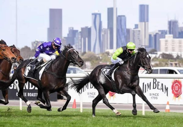 Persan (Pierro) wins the Gr.3 Bart Cummings at Flemington