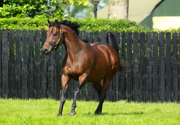 Warrior's Charge (Munnings) Wins Gr.3 Phillip H. Iselin At Monmouth Park