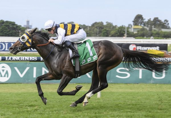 Quick Thinker (So You Think) winning the Gr.2 Tulloch Stakes at Rosehill