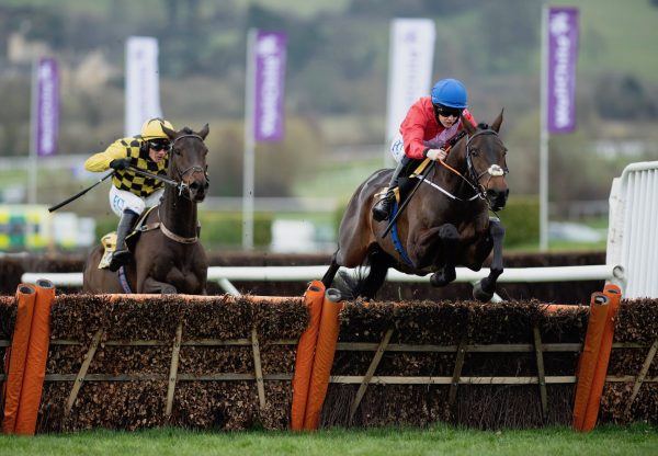 Quilixios (Maxios) Wins The Grade 1 Triumph Hurdle At Cheltenham