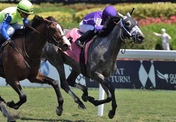 Rhythm Section (American Pharoah) Wins Gulfstream Park Maiden