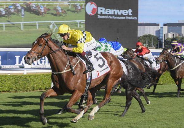 Rocha Clock (Pierro) winning at Randwick