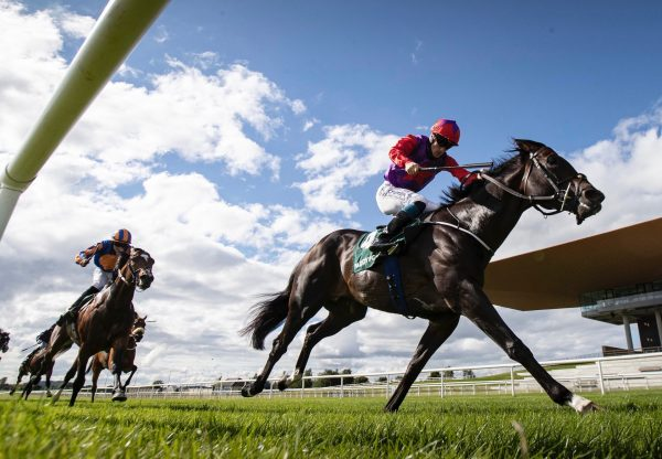 Romanised (Holy Roman Emperor) Wins The Gr.2 Minstrel Stakes For A Second Time at the Curragh