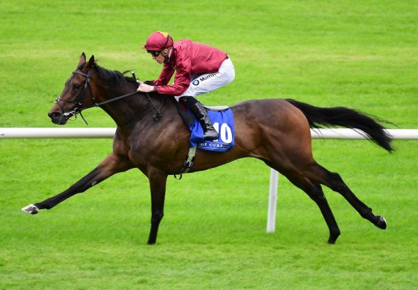 Ruling (Camelot) Wins His Maiden At The Curragh