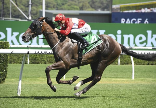 Sacramento (Pierro) winning at Randwick