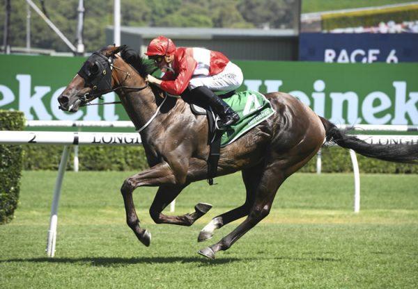 Australia ex Thai Haku colt selling for €260,000