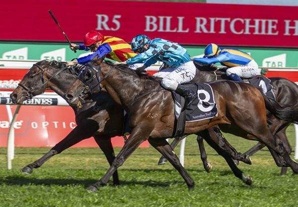 Seige Of Quebec (Fastnet Rock) winning the G3 ATC Bill Ritchie Stakes at Randwick
