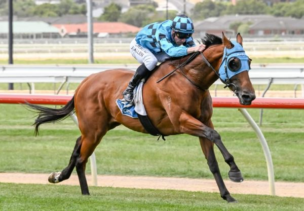 Setanta (Fastnet Rock) winning at Warrnambool