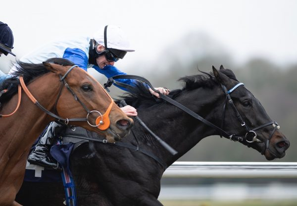 Sir Edward Elgar Wins His Maiden At Lingfield 1