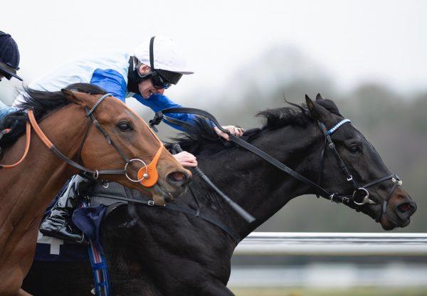Sheidel (Holy Roman Emperor) winning the G3 VRC Sensis Stakes at Flemington