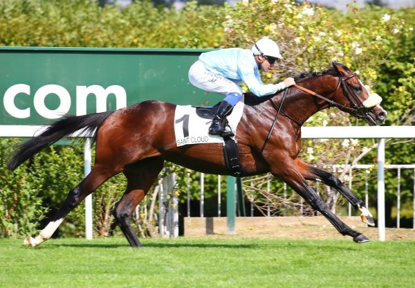 Skyward Becomes The Latest Stakes Winner By Camelot