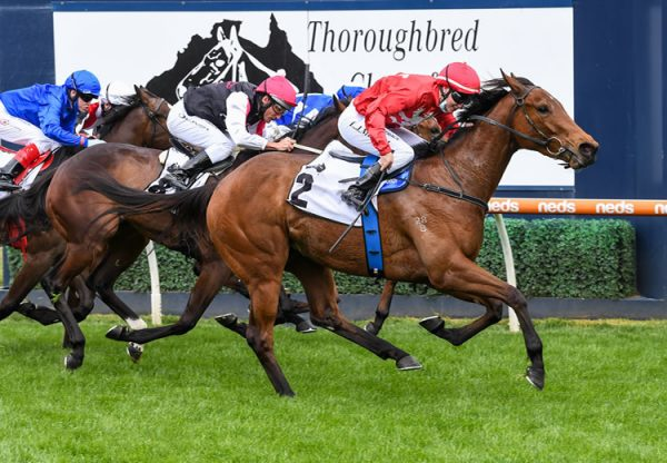 Sneaky Five (Fastnet Rock) winning the Gr.3 Thoroughbred Club Stakes at Caulfield