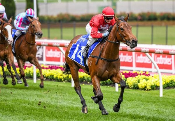 Sneaky Five (Fastnet Rock) winning the Inglis Banner at Moonee Valley