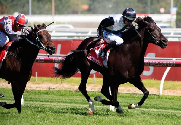 So Si Bon (So You Think) winning the Listed VRC Lord Stakes at Caulfield