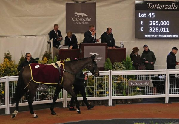 Son Of Yeats Tops Cheltenham December Sale At £295000