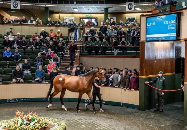 Son Of Yeats Tops 2019 Goffs Land Rover Sale
