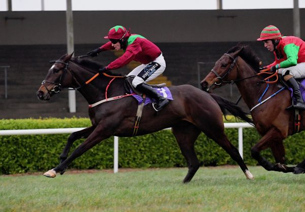 Beechwood Emily (Holy Roman Emperor) Gets Off The Mark at Newcastle