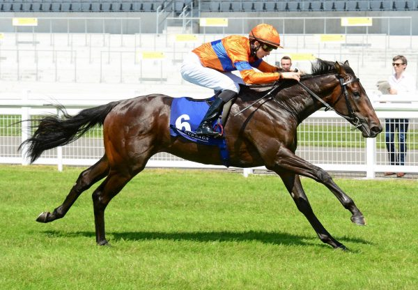 Swift One (No Nay Never) Gets Off The Mark At The Curragh