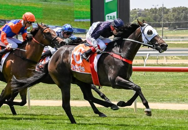 Swift Sure (Vancouver) winning at Warrnambool