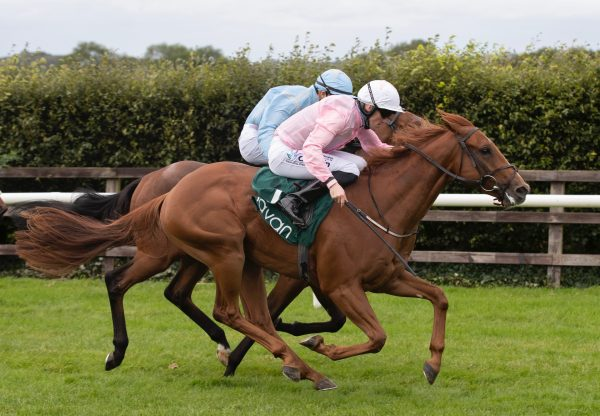 Tammany Hall (No Nay Never) Wins At Navan