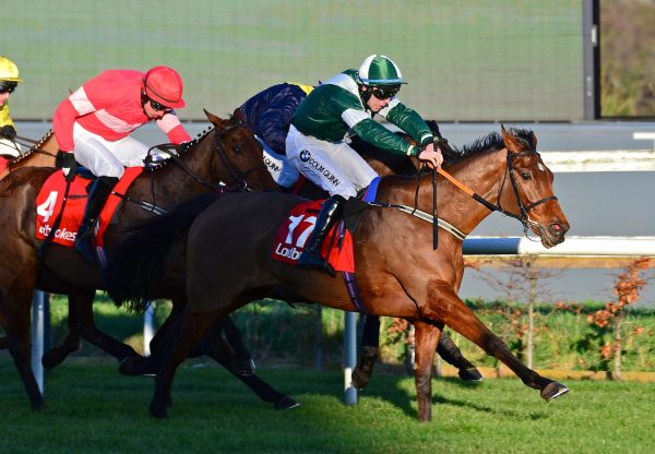 Thosedaysaregone (Getaway) Wins Grade B The Ladbrokes Hurdle at Leopardstown
