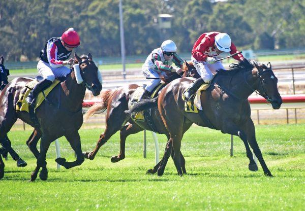Thrillster (Starspangledbanner) winning the Gold Rush Plate at Bendigo