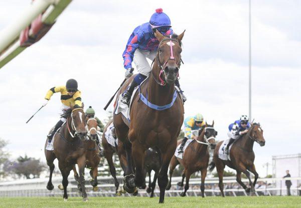 King Of Pharoahs (American Pharoah) wins at Coleraine