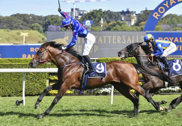 Torrens (Adelaide) winning the Listed Tattersalls Cup at Randwick