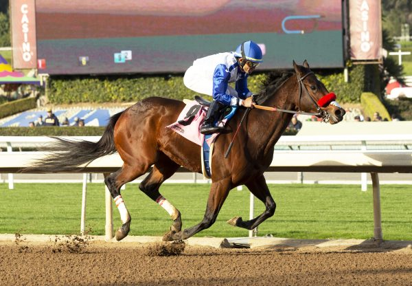 Venetian Harbor (Munnings) Breaking Santa Anita Maiden
