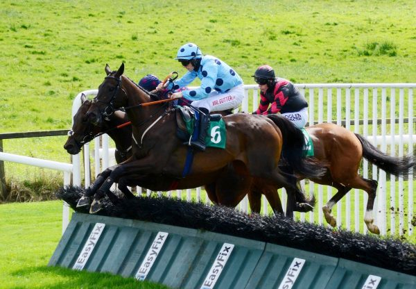 Western Run (Westerner) Impresses In The Maiden Hurdle At Downpatrick