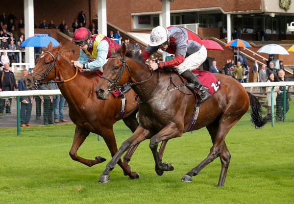Whatabird Becomes The Latest Winner By Gleneagles
