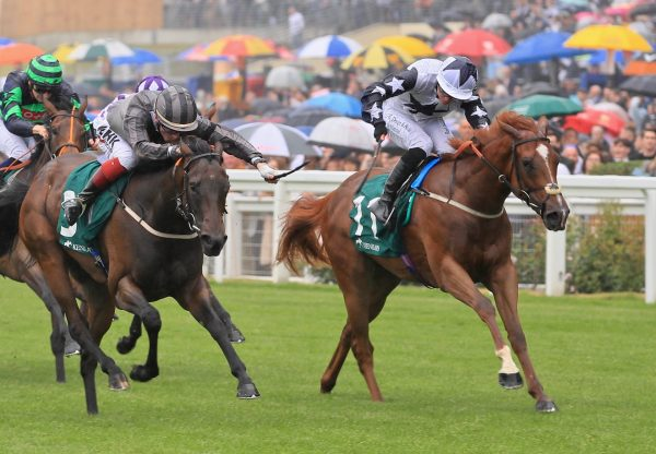 Zain Claudette (No Nay Never) Wins The Group 3 Princess Margaret Stakes at Ascot