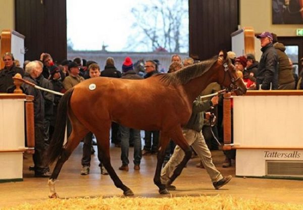 Australia Colt ex Sweepstake selling for 150,000gns at Newmarket