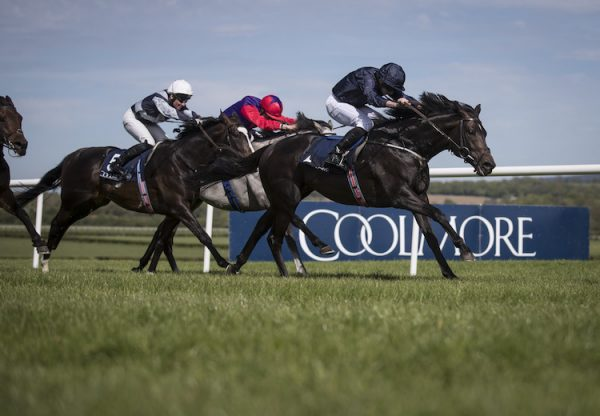 Cliffs Of Moher (Galileo) winning the G2 Morresbridge Stakes at Naas