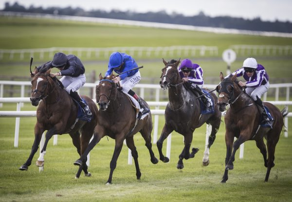 Flag Of Honour (Galileo) winning the G3 St Leger Trial at the Curragh